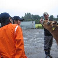 酪農体験2